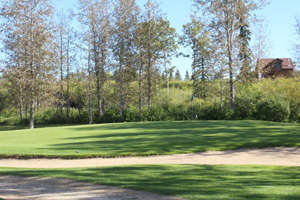 fairway with trees in the background